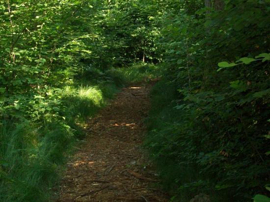 Chemin d'accès aux postes de peche coté aval