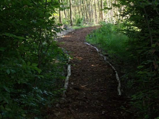 Chemin d'accès aux postes de peche  coté amont